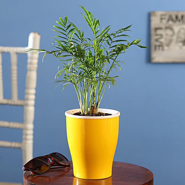 Chamaedorea Plant Online