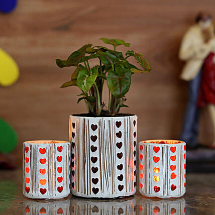 outdoor plant with attractive holder for home