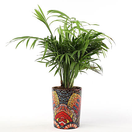 Green plant in decorative ceramic pot online