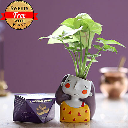 Online Chocolate Burfi And Syngonium Plant