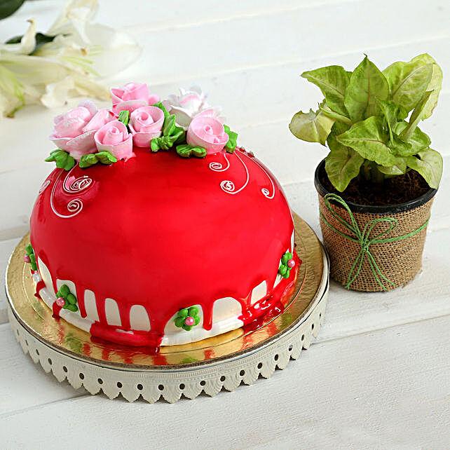 Chocolate Cake Syngonium Plant Combo:Cakes N Plants
