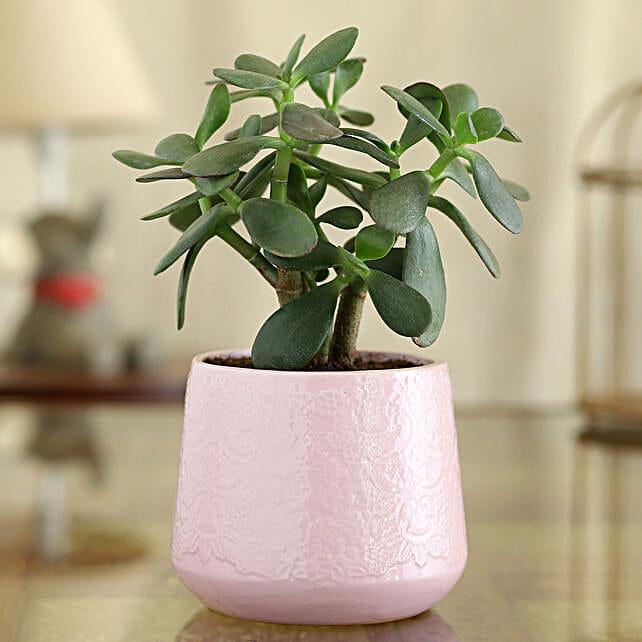 Crassula Plant In Pink Flower Ceramic Pot:Ceramic Planters