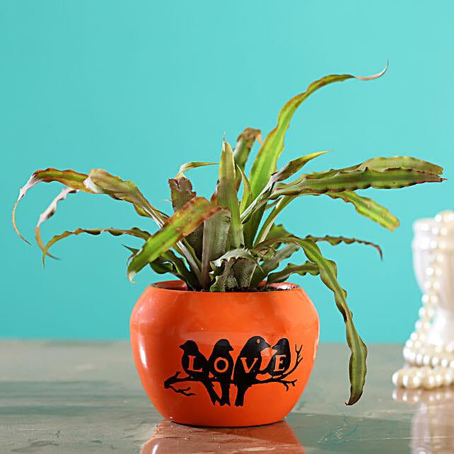 Crypthensus Plant In Orange Printed Love Pot