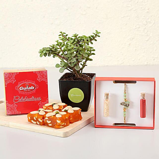 rakhi with plant combo online