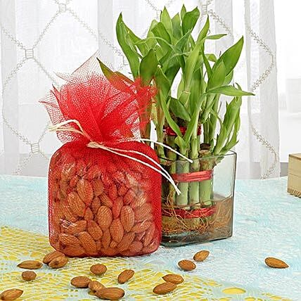 Lucky bamboo with dry fruits