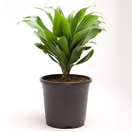 online air purifying plant for home