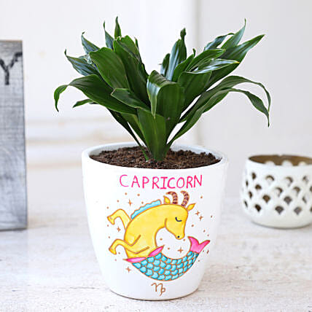 Online Plant In Capricorn Pot