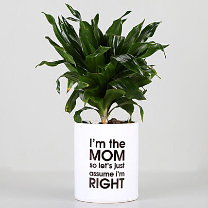 air purifying plant with printed mug for mothers day:Send Shrubs
