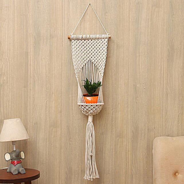 Dracaena Plant With Beige Hanging Planter