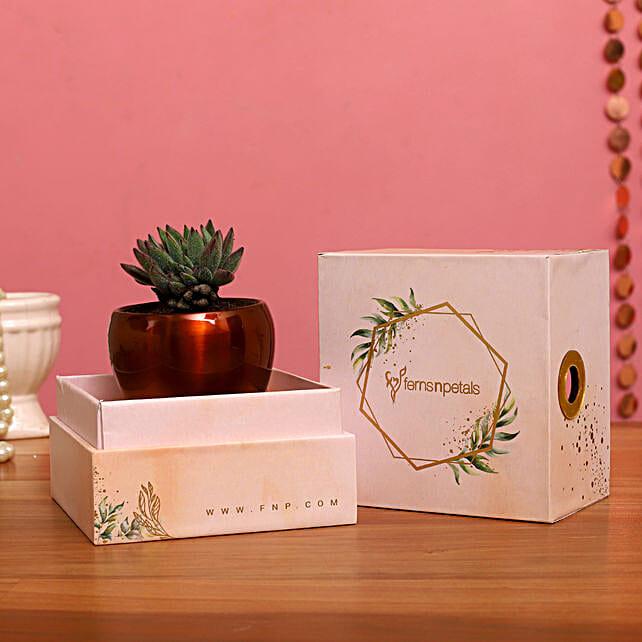 Echeveria Colorata Plant In FNP Printed Succulent Box