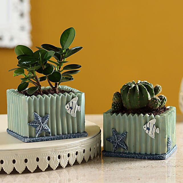 Echinocactus & Ficus Plant Set In Resin Pots:Ficus Plants