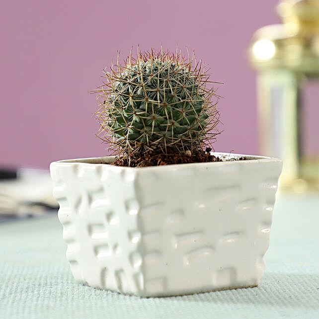 exclusive plants online