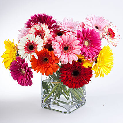 Elegant Gerberas In Glass Vase