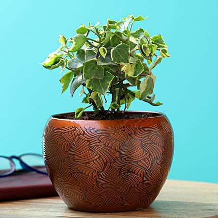 English Ivy Plant In Copper Pot