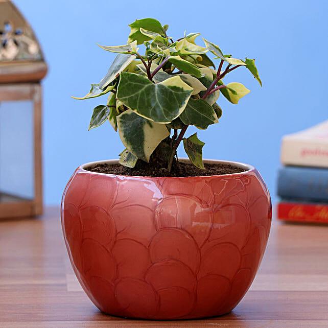 English Ivy Plant In Enamel Print Pot