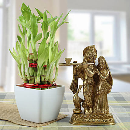 Eternal Bond-Radha Krishan 5.5 inches,2 Layer Bamboo,Yellow Square pot 2.5 inches height