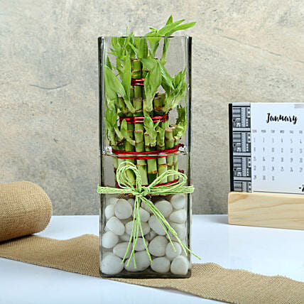 Three layer bamboo put in a large round glass vase with white pebbles:Send Spiritual Vastu Plant