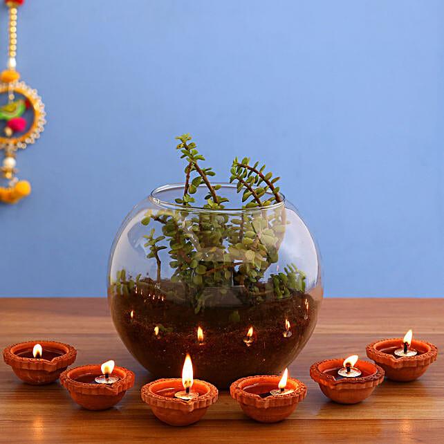 Fantastic Jade Plant Terrarium & 6  Diyas