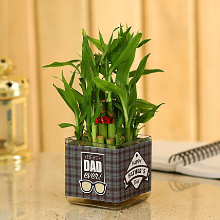 Father's Day Special Bamboo Plant