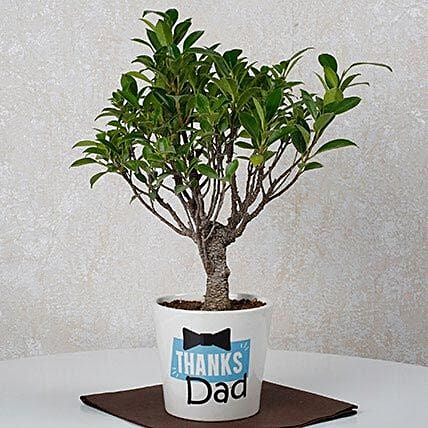 ficus plant for father