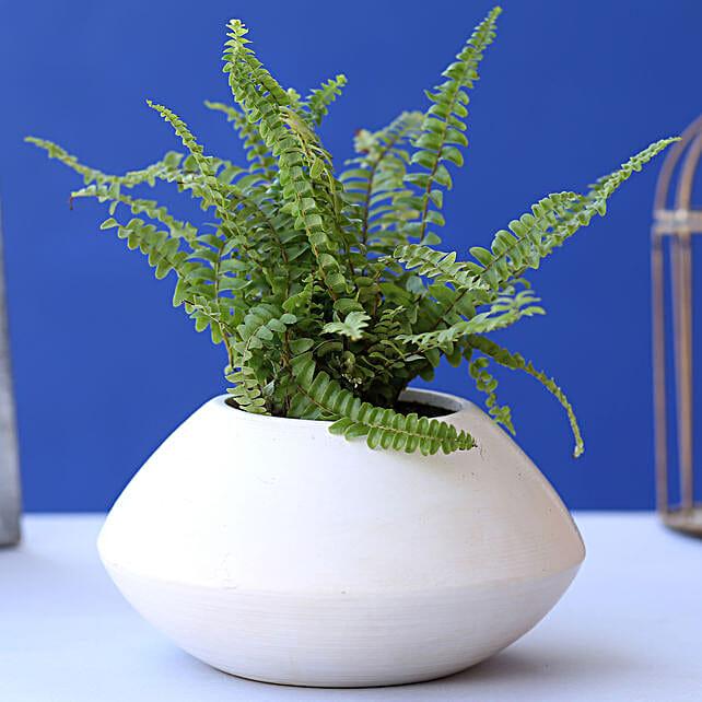 Fern Plant In Triangular Ceramic Pot:Ceramic Planters