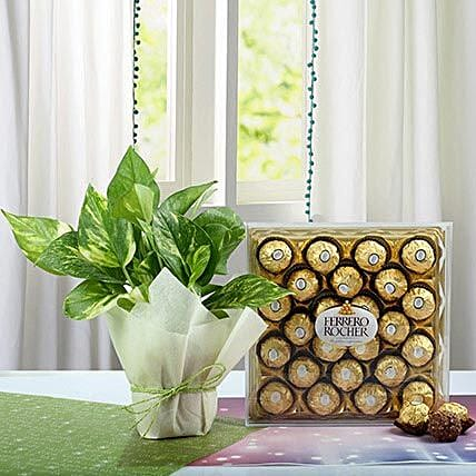 Combo of Money Plant and Chocolates:Diwali Gifts Haldwani