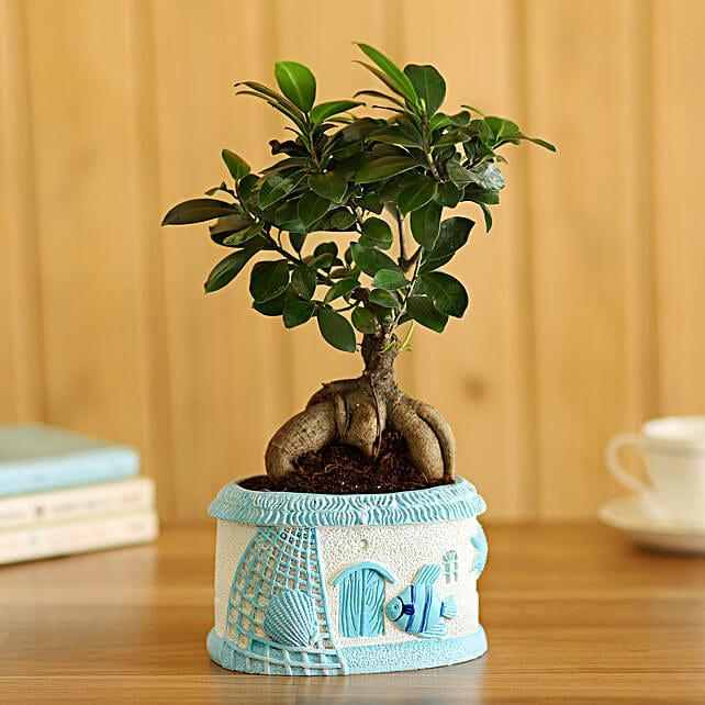 Ficus Bonsai In Sea House Planter Hand Delivery