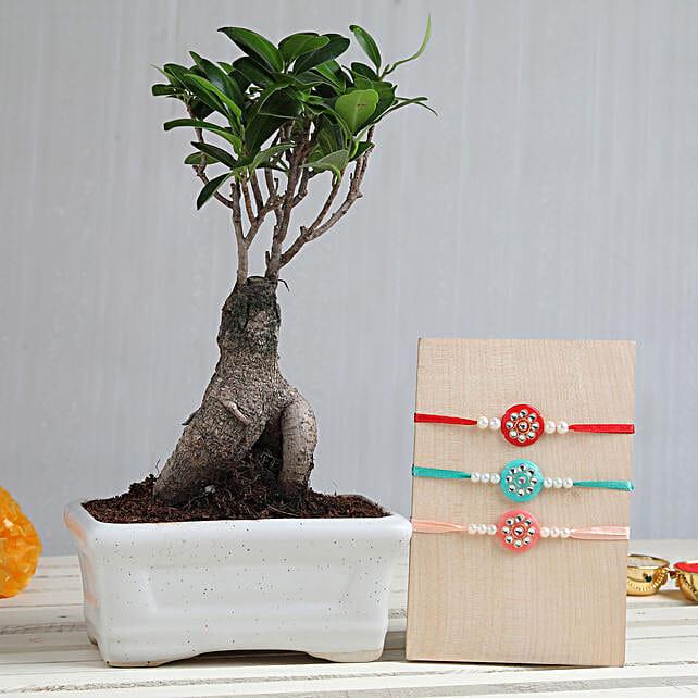 Online Plant & Rakhi Set For Bhai