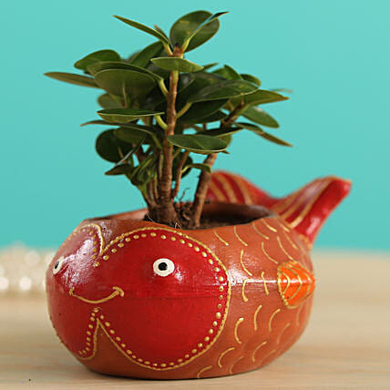Ficus Compacta In Hand-painted Fish Planter