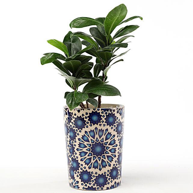 online indoor home décor plant