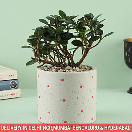 Plant in Polka Dot Pot For Family