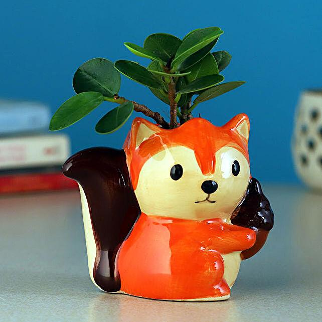 Ficus Compacta Plant In Sitting Fox Ceramic Pot:Wildlife Art planters