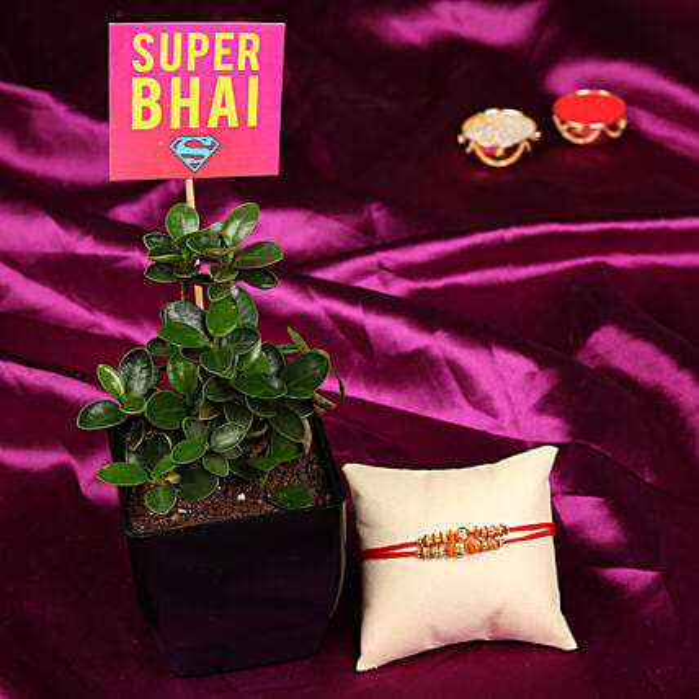 Online Rakhi with Plant Combo