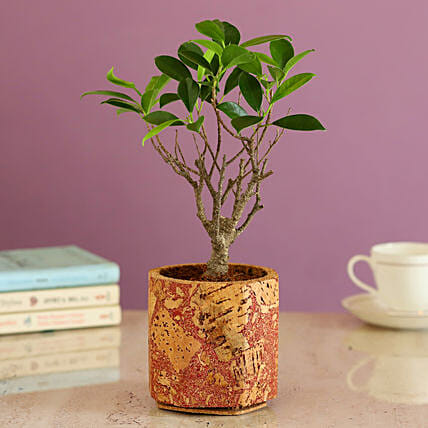Beautiful Plant In Red Cork Planter Online