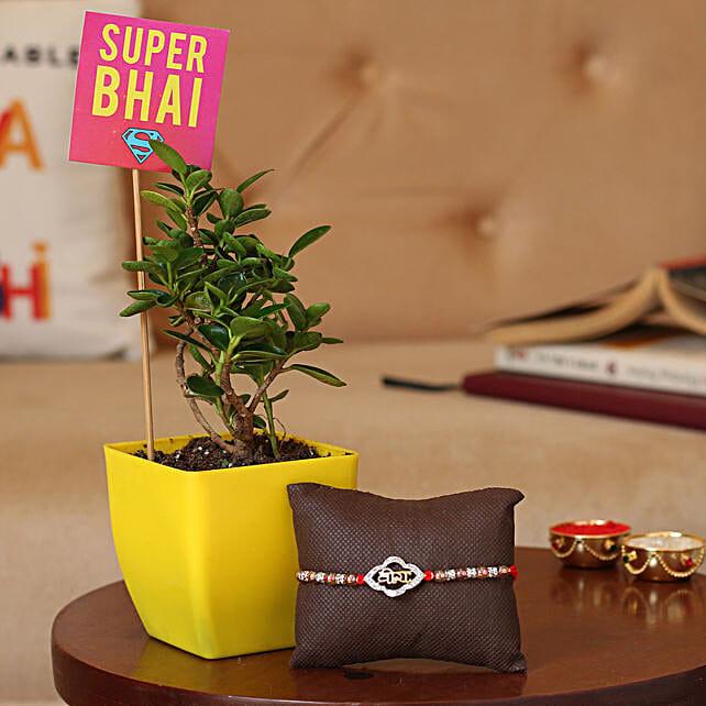Online Rakhi with Plant For Bro:Unusual Rakhi