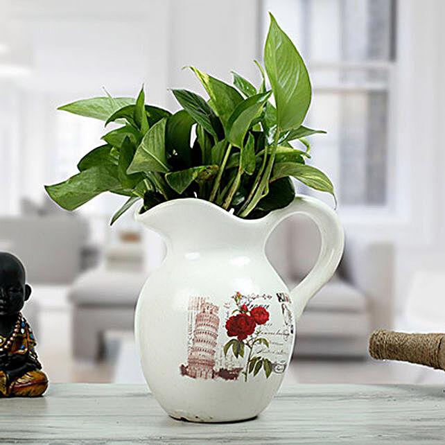 Money Plant in Jug Shape Vase
