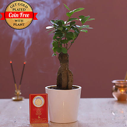 Online Free Gold Plated Coin With Ginseng Bonsai