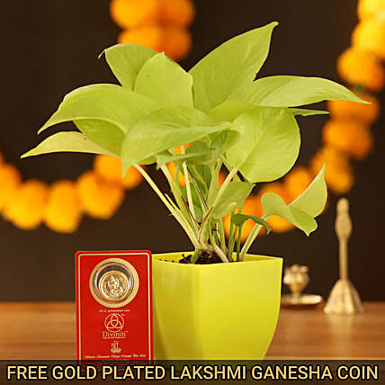 Golden Money Plant With Free Gold Plated Coin