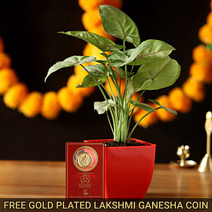 Syngonium Plant & Free Gold Plated Coin