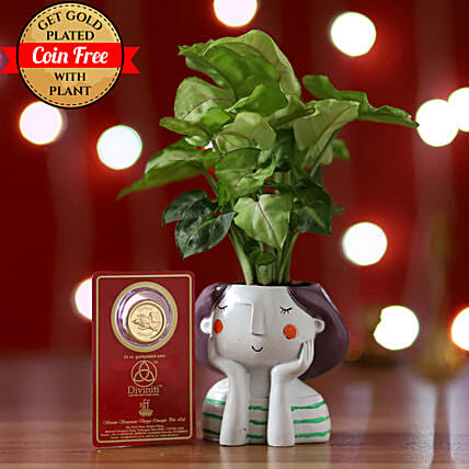 Online Syngonium Plant And Coin