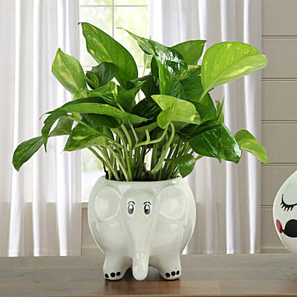 Money plant in an elephant shaped ceramic vase:Plants for Living Room