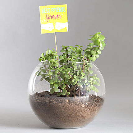Friends Forever Jade Plant Terrarium:Good Luck Plants
