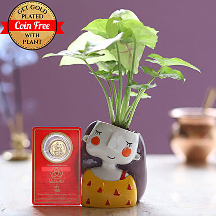 Online Gold Plated Coin With Syngonium Plant