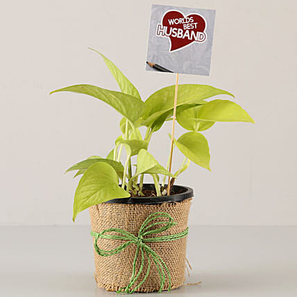 exclusive plant for karwa chauth online