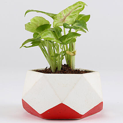 plant in geometry shape pot:Concrete Planters