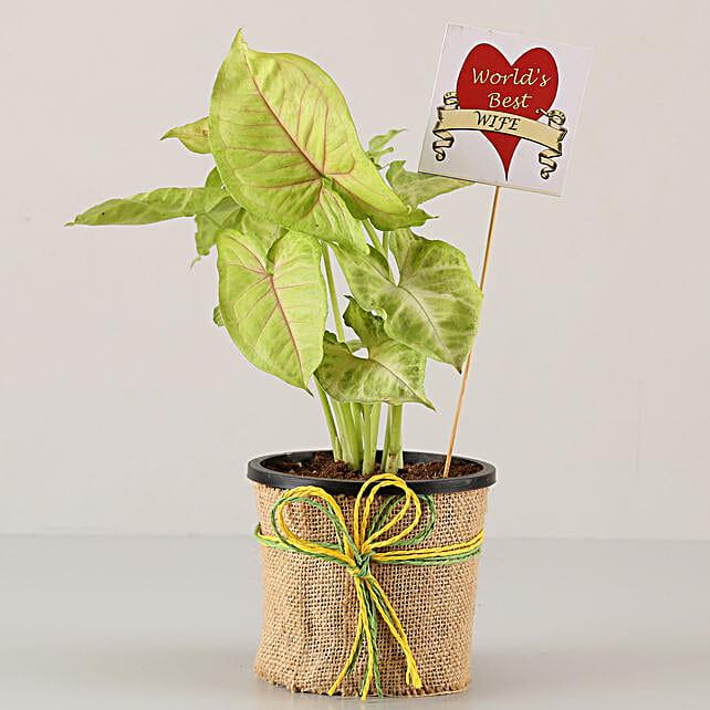 online plant for karwa chauth:Karwa Chauth Gifts Trivandrum India