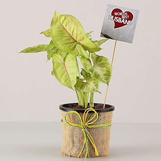 attractive plant for karwa chauth online:Karwa Chauth Gifts Trivandrum India