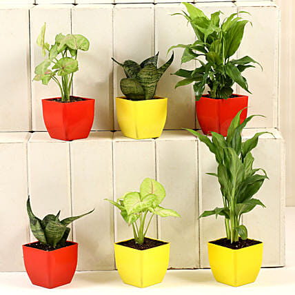 Gorgeous Set Of 6 House Plants