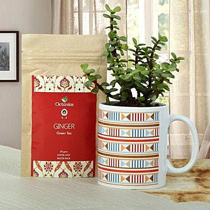 A gift set of jade plant in a printed white ceramic mug and octavious ginger green tea:Mugs Planters