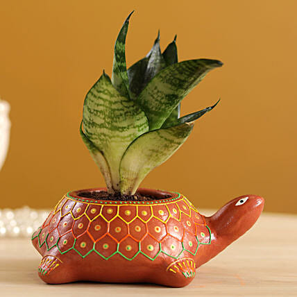 Green Sansevieria In Hand-painted Turtle Planter
